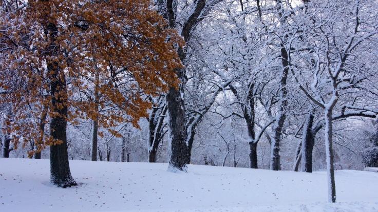 Tree Frosting at Minnehaha Park
