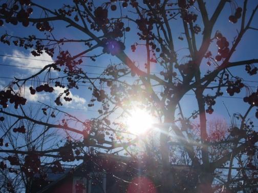 Finally, Sun and Blue Sky in Longfellow-40