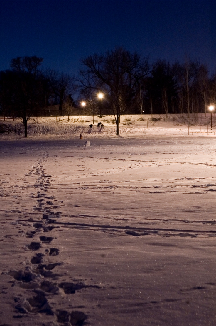 day-15-night-sledding-at-brackett-park