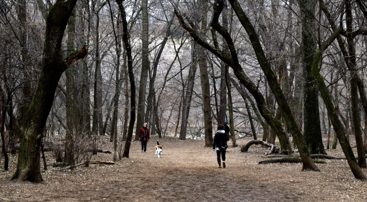 DogPark1-cropped